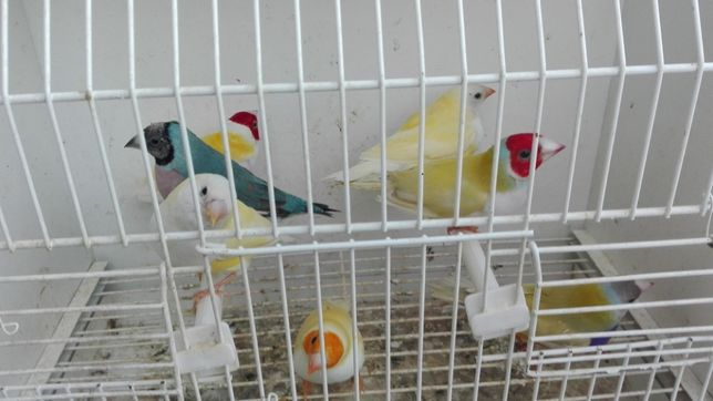 Vendo Diamantes gould