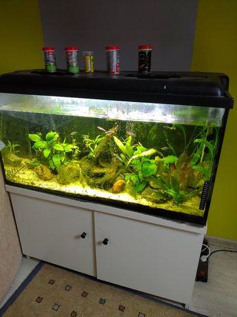 Akwarium 200 litrów / 100 * 40 * 50/ + mega gratisy