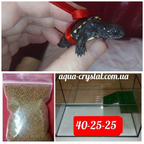 Для подарунка: Черепаха+тераріум+корм.Доставка