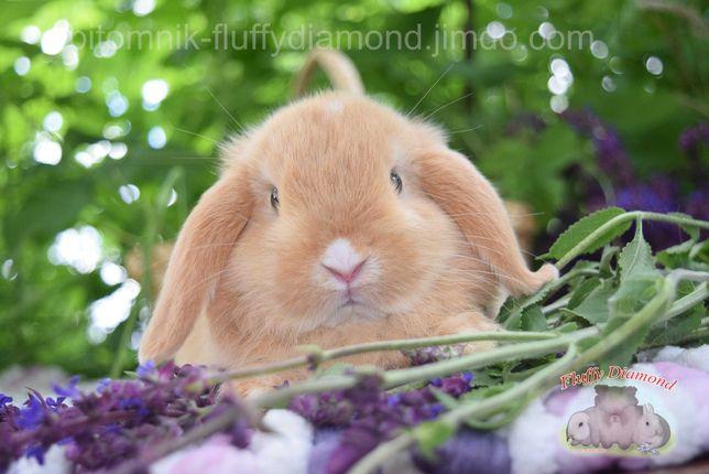Породистые крольчата. Вислоухие и торчеухие малыши из питомника