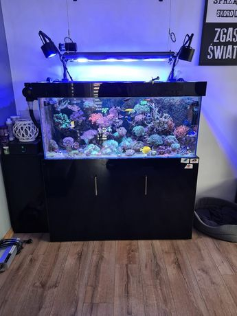 Akwarium morskie 120x50x50 opti white