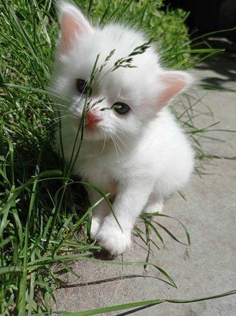Отдам в добрые руки белоснежных котят.