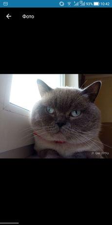 Кіт вільний вязка