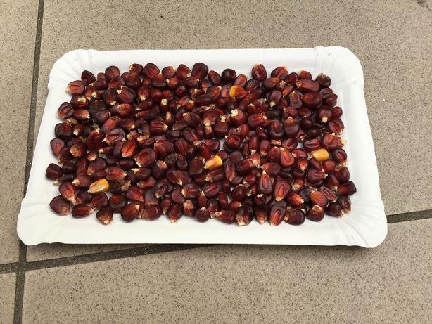 kukurydza czerwona (bordo)