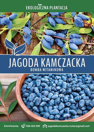 Jagoda Kamczacka - Owoce - Eko - Zbiór trwa