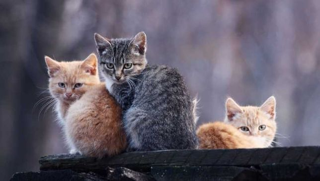 дворовых котят в хорошие руки срочно финансовая помощь 200 грн в месяц