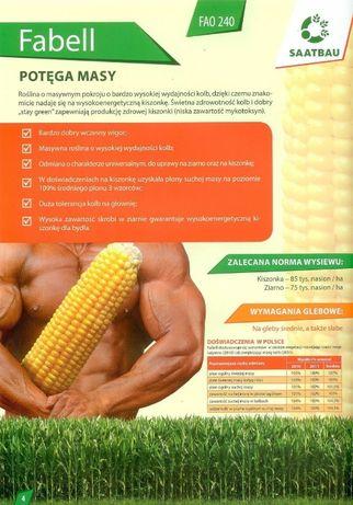 Kukurydza FABELL 240 FAO Saatbau Nasiona Kukurydzy Cena Brutto