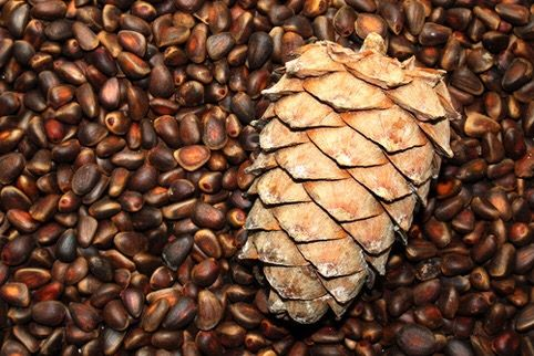 Кедровый орех, урожай  2020 ( Сибирь) супер качество