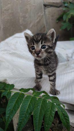 Котенок ищет дом