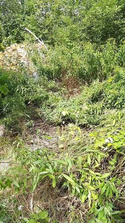 Земельна ділянка в садовому товаристві