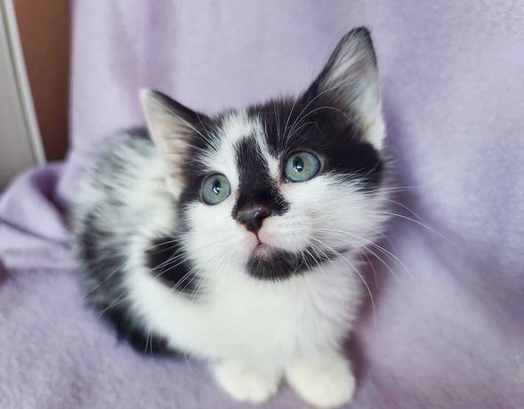 Маленьке кошенятко Ума 2 місяці киця кішка кошка Терміново!
