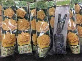 Róże krzaczaste pakowane sadzonki