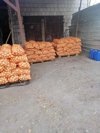 sprzedam cebule ziemniaki dowioe kalib 5/9