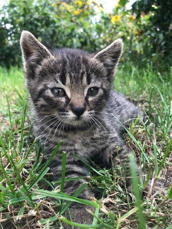 Oddam za darmo małego kotka