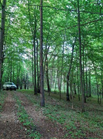 Działka rekreacyjna w Krajobrazowym Parku ,,Orlich Gniazd'