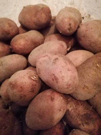 Sprzedam ziemniaki!