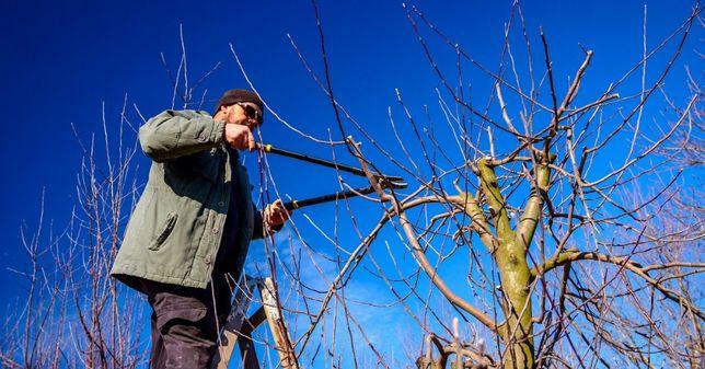 Обрезка сада деревьев Садовник Покос травы уст-во Виноградных шпалер