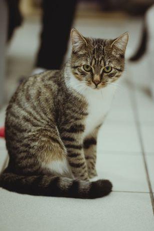 Portos - kot, który nie szuka kontaktu, ale szuka domu