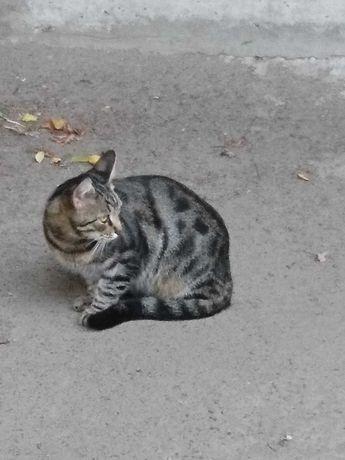 Красивый кот Питоша ищет семью