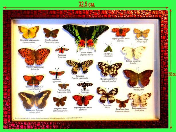 Настоящие бабочки в рамке. Коллекция бабочек