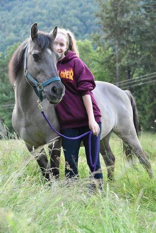 Pomoc przy koniach WSTRZYMANE