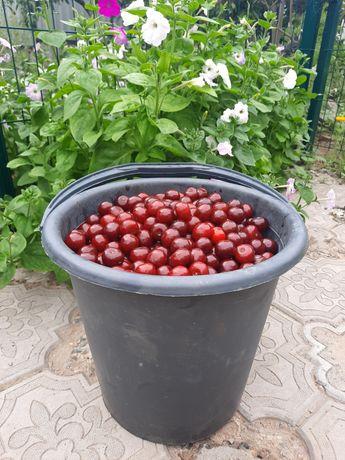 Сочные,сладкие вишни!
