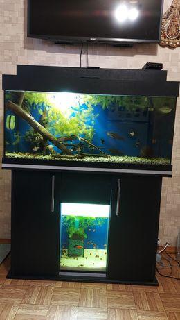 Продам аквариум (1+1)