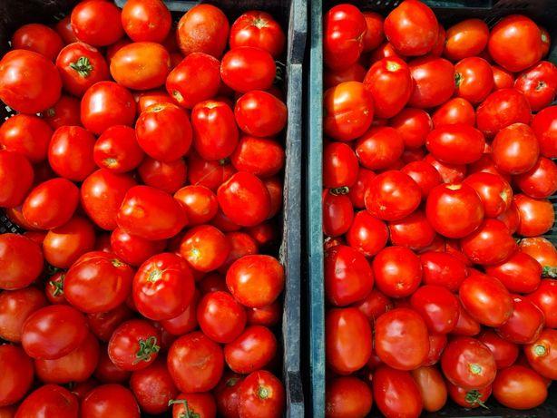 Pomidor gruntowy, polny- ostatnie dni sprzedaży.  Buraczek czerwony .