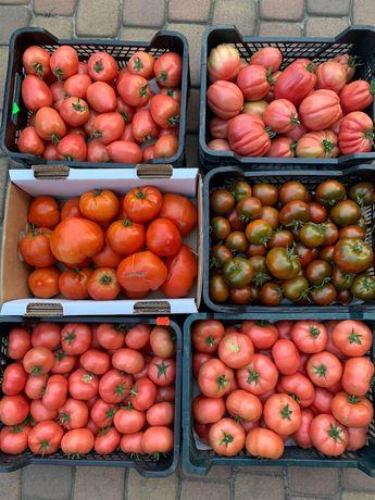 pomidory uprawa tradycyjna