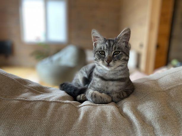 Кішечка, кицька, котеня