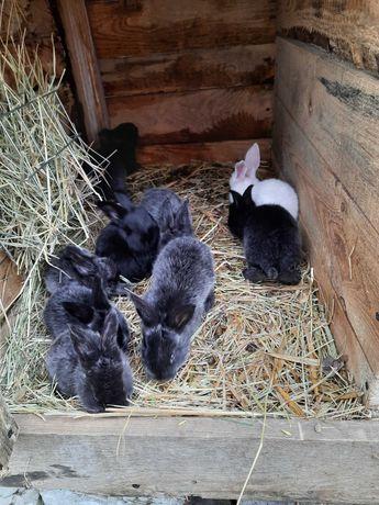 Samica z młodymi królikami