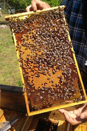 Odkłady pszczele z ulem lub bez
