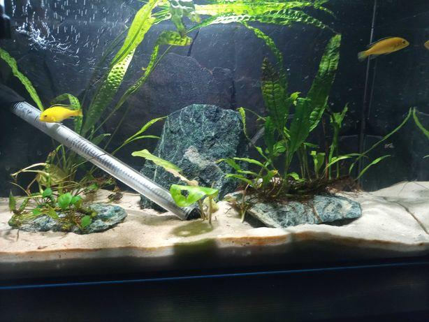 akwarium 60L + życie