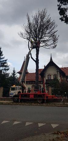 Wycinka i pielęgnacja drzew, usługi zwyżką
