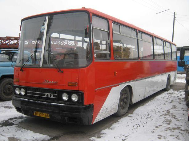 Автобус IKARUS 250.59