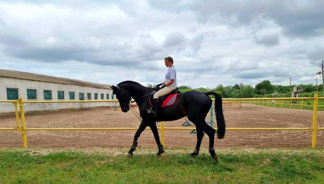 Постой для лошадей, аренда денников, конюшня Харьков