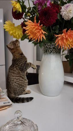 Кот ДОБРЯК! Кусаться, царапаться и мяукать не умеет.