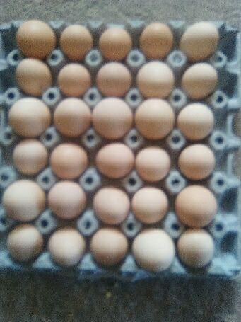 Sprzedaż jajek wiejskich
