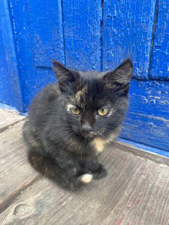 Трехмастная кошечка (котенок)