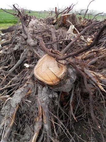 Oddam drzewo konary pnie