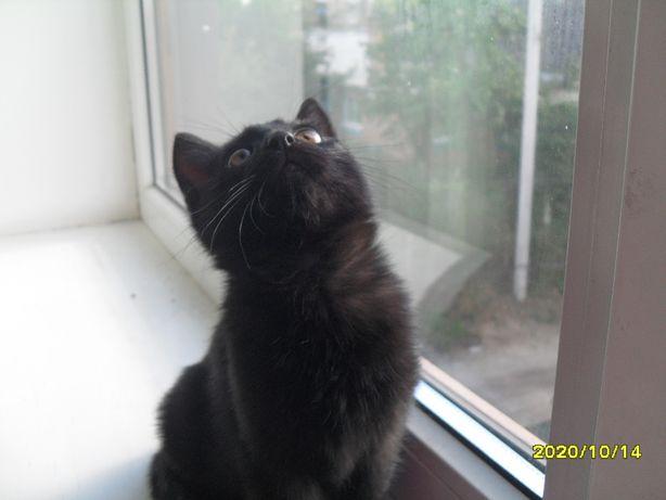 Кошеня. Абсолютно чорне.