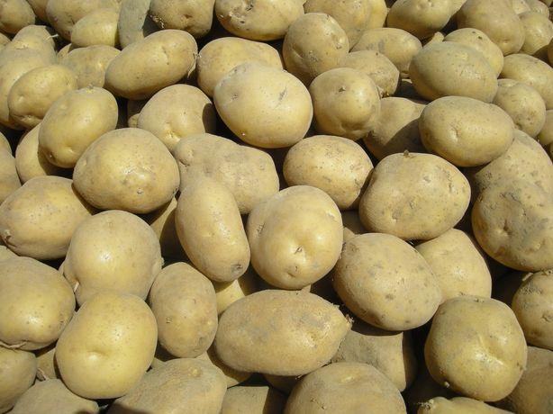 Ziemniaki Gala Lili