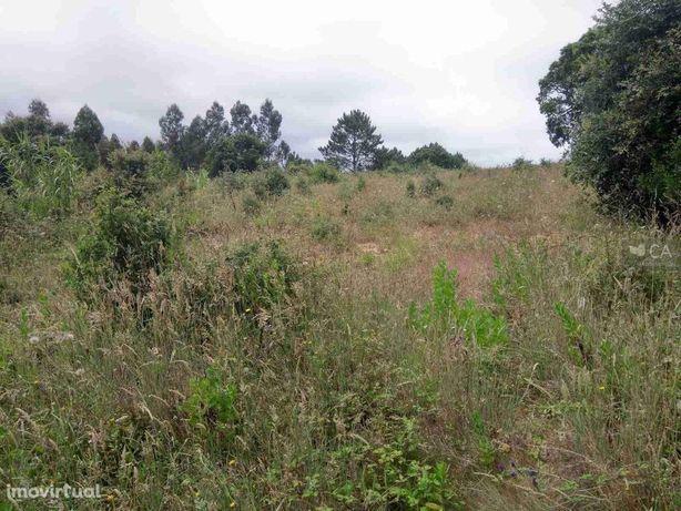 Terreno agrícola - Roliça