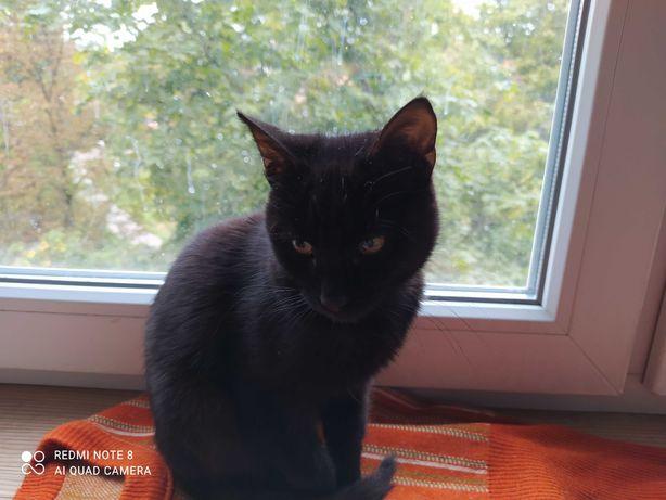 Срочно! Котенок ищет дом. Котенок ручной, ласковый и очень симпатичный