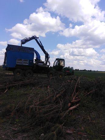 Wycinka drzew samosiejek, rębanie, usuwanie karp, pni drewna drzewa