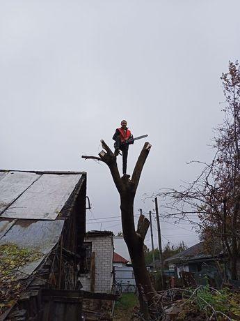 Спил деревьев в Чернигове