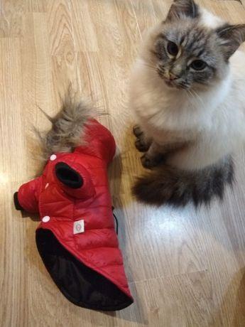 Курточка для песика