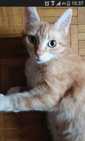 2 letnia ruda kotka