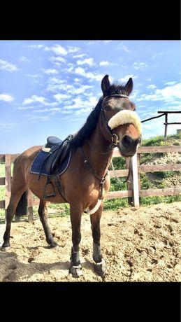 Wydzierżawię konia do towarzystwa z przeniesieniem