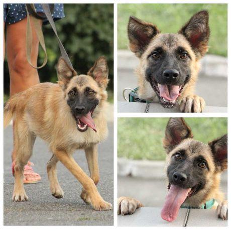 Собачка с шикарной улыбкой Матильда, красивая небольшая собака, до 1 г
